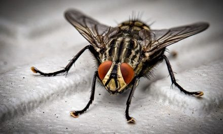 5 Signs You Need Professional Pest Control Services